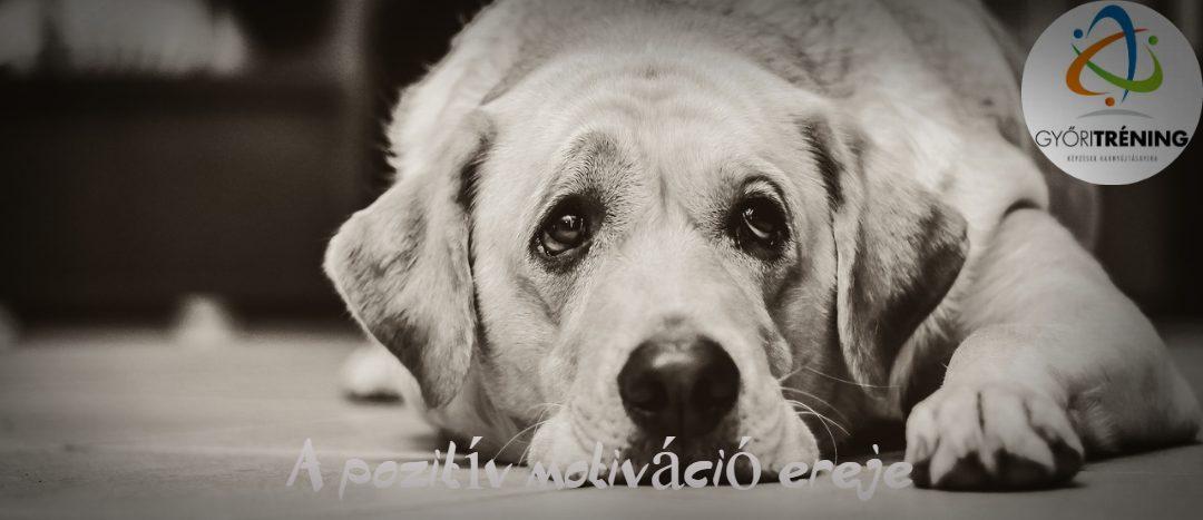 Pozitív motiváció – avagy hogyan motiválj egy labradort?